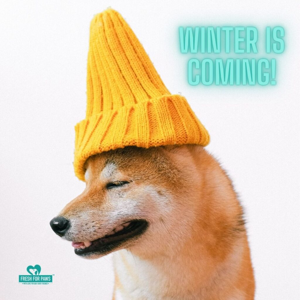 Winter tips for dogs