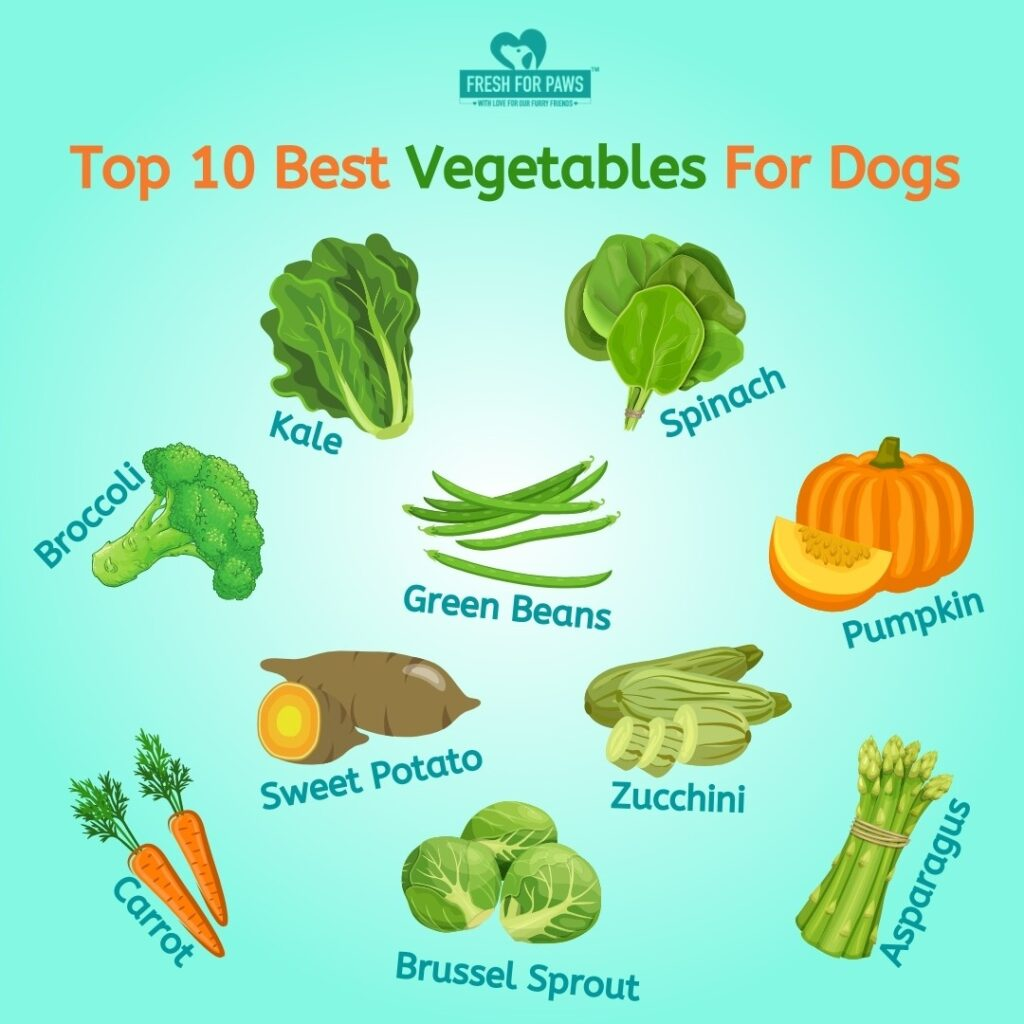 Top 10 best Vegetables for dogs