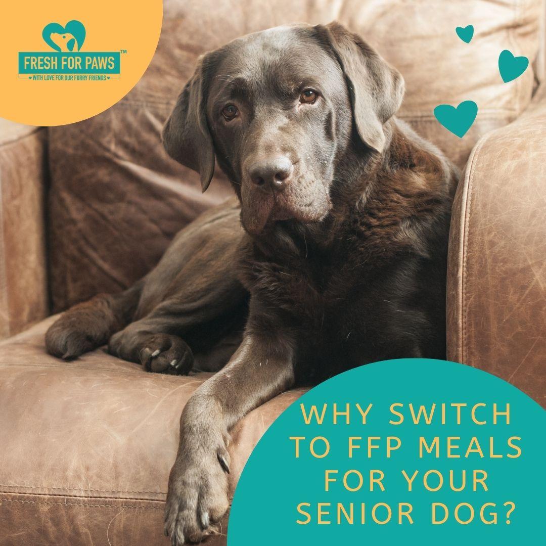 Dog food for senior dogs