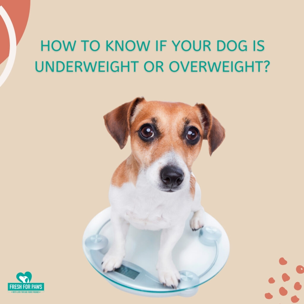 How to know is your dog is underweight or overweight