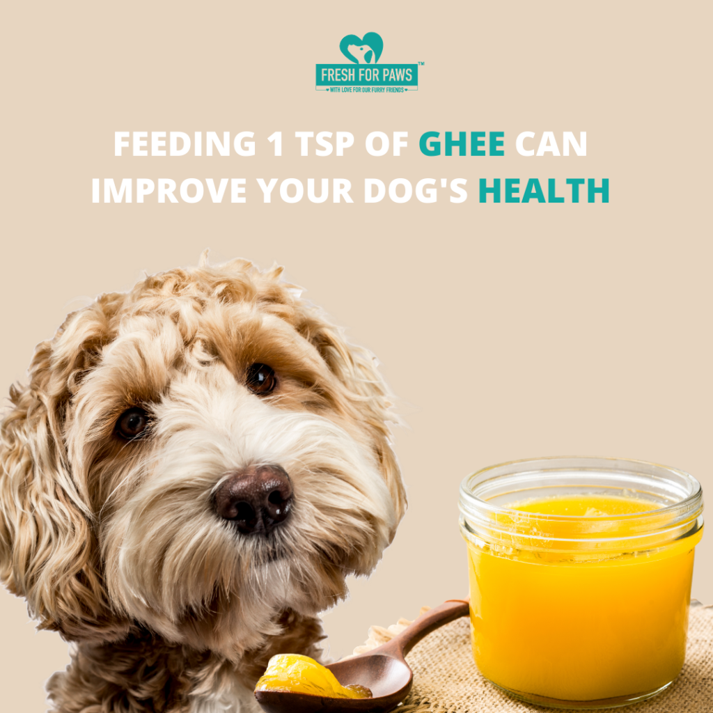 Feeding 1 tsp of ghee can improve your dog's digestion (1)